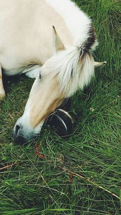"""equestrian-vibes: """" Untitled na We Heart It. All The Pretty Horses, Beautiful Horses, Animals Beautiful, Cute Horses, Horse Love, Fjord Horse, Horse Riding Quotes, Sleepy, Animals And Pets"""
