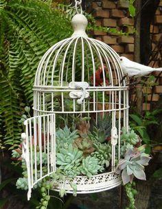 Cage à oiseaux contenant des plantes grasses.