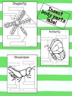 Parts of an Insect worksheet | Please note: animals were not harmed while making the following ...