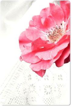 der Rose süßer Duft genügt