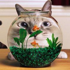 it's fish, it's a cat, it's a CATFISH