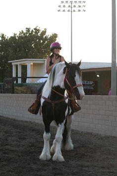 Monarch- drum horse stallion