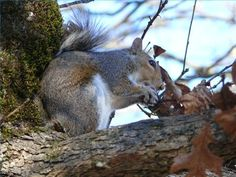 How to Use Pepper for Squirrel Repellent