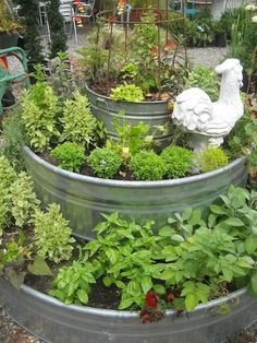 Metal Stock Tanks 15 Tips for Growing Food in Metal Troughs AKA Stock Tanks Diy Gardening, Organic Gardening Tips, Small Space Gardening, Gardening For Beginners, Small Gardens, Gardening Courses, Gardening Quotes, Gardening Supplies, Galvanized Water Trough
