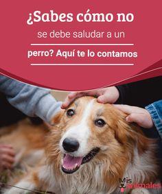 ¿Sabes cómo no se debe saludar a un perro? Muchos amantes de los perros se lanzan a saludar a los canes cuando se encuentran con uno por la calle. Aquí te contamos cómo no se debe saludar a un perro.