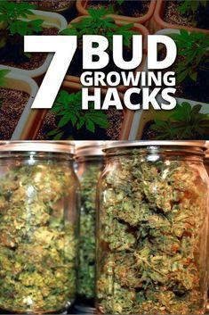 7 Grow Hacks For Better Buds Growing Weed, Marijuana Plants, Cannabis Shop, Buy Cannabis Online, Buy Weed Online, Whatsapp Text, Gardening, Ganja, Hemp