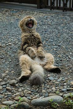 Laughing cat.