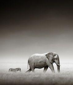 Follow the leader by Johan Swanepoel