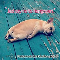 You know you've been pushing it a little too hard lately. Time for a break. Take the 30 Day No Alcohol Challenge and feel amazing again. Click the link in my bio now. Alcohol Quotes, 30 Day Challenge, Sober, French Bulldog, Challenges, Photo And Video, Feelings, Link, Amazing