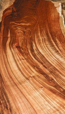 Tasmanian Blackwood - almost looks like it is melting