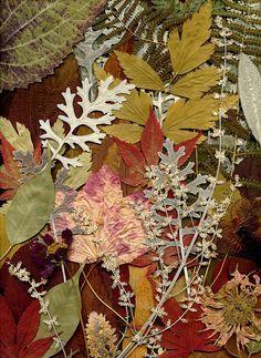 Journal d'art Québec: Appel de créations septembre 2020 Land Art, Fairy, Collage, World, Wallpaper, Nature, Plants, Journal, Garden