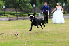 Wedding, The Black Dog, Labrador, Lawn, Grassland Dog Wedding, On Your Wedding Day, Wedding Photography Shot List, Wedding Program Sign, Groom Reaction, Personalized Thank You Cards, Ceremony Seating, Bride Accessories, Groom And Groomsmen