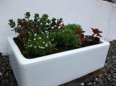 Belfast sink herb and flower garden Belfast Sink Herb Garden, Belfast Sink Garden Feature, Belfast Sink Planter, Little Gardens, Back Gardens, Small Gardens, Garden Projects, Garden Ideas, Butler Sink