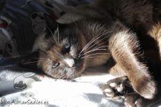 Sleepy a lo suyo, vaya #gato