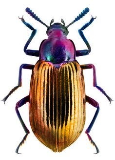 I chose this image of the beetle because I love how the colors in it are extremely strong, and links to my theme well being about earth - beetles are found in the earth, and are normally looked at as ugly creatures.