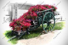 Loire Valley Flower Cart Tours France Color Splash by JWPhoto