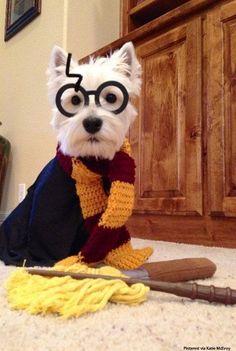 50 Divertidos disfraces de Halloween para tu perro ⋮ Es la moda