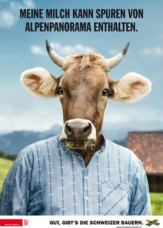 Hoftiere Kuh - Spuren von Alpenpanorama