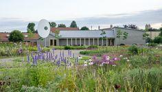 Piet Oudolf - Open Field — Hauser & Wirth Somerset