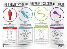 Chemistry of Blood Colours Poster