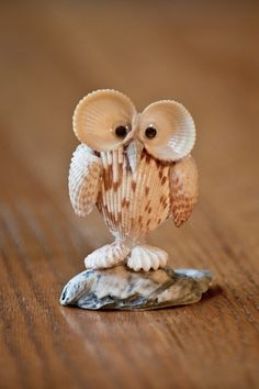 best Owl sea shells art/ Schelpen uil images on Pinteres Seashell Art, Seashell Crafts, Beach Crafts, Crafts With Seashells, Seashell Projects, Driftwood Projects, Shell Animals, Shell Decorations, Shell Ornaments