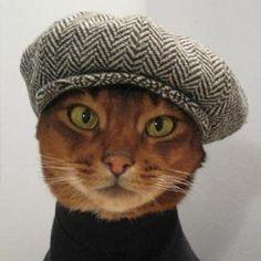 まるで塩系男子♡トキ・ナンタケットに代表されるアビシニアンの魅力 | 猫壱
