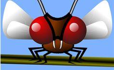Espantar a los mosquitos con limón - Trucos de hogar caseros