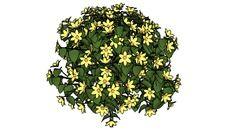 3D Model of Arbusto com flores