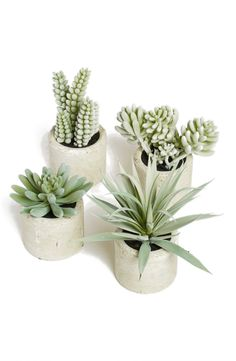 A charming artificial succulent is wonderfully hard to kill and will add a bit of modern greenery to any space.