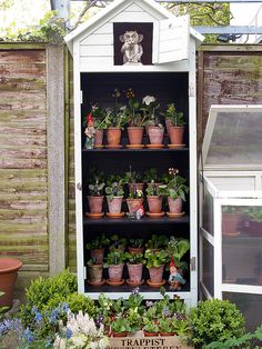 Auricula Theatre (1) | Flickr - Photo Sharing!