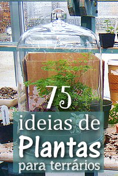 75 Ideias de Plantas para terrários - Jardineiro.net