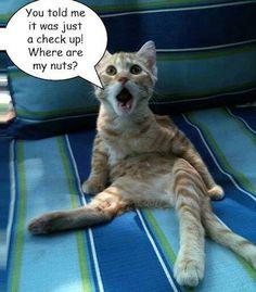 Cat vet visit