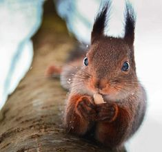 Portraits of Squirrels, Birds and Foxes by Animal Whisperer Konsta Punkka #inspiration #photography