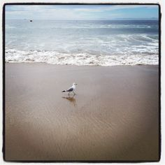 photo.seagullonbeach   Instagram Inspiration: Paving Your own Path on www.dandelionmoms.com
