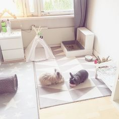 43 This DIY Dog Crate Furniture Piece Will Transform Your Living Room ? Home & Garden Design Diy Bunny Cage, Diy Bunny Toys, Bunny Cages, Rabbit Cages, Rabbit Cage Diy, Indoor Rabbit House, Indoor Rabbit Cage, House Rabbit, Pet Rabbit