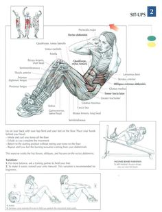 Sit-Ups ♦ #health #fitness #exercises #diagrams #body #muscles #gym #bodybuilding #abs #abdomen