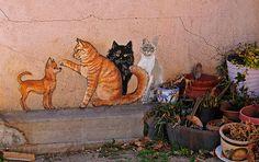 Some More Miami Cats by MarvHansen, via Flickr