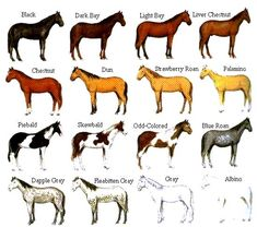 special breed s of horses | the international museum of the horse horse colors