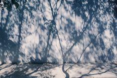 Light And Shadow Photography, Film Photography, Nature Photography, Dappled Light, Metal Magazine, New Wall, Beautiful Lights, Photos Du, Decoration