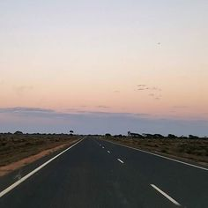 Want to go for an epic roadtrip? Cross the Nullabor. Do it with a friend, family, or even by yourself. Just get out there and see this absolutely breathtaking country of ours on this amazing bucket list trip. Sunrise on the Nullabor #anotherdayinwa #seesouthaustralia #roadtrip #nullabor #campervan #vanlife #caravan #rvlife #rv #travel #instatravel #4wd #ausroadtrip #bucketlist #sunrise #campingwithdogs #seeaustralia #thisiswa #discoveraustralia