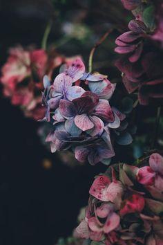 autumn-floral-nature-purple-blue-ink-dark