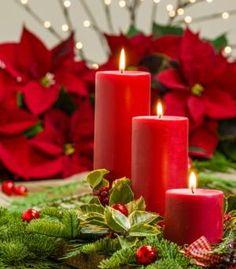 Flores para decorar en Navidad