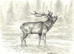 Deer by Salomé M.