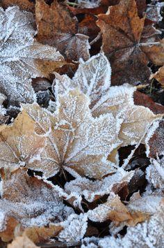 Hojas invernales