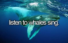 I have already had the opportunity to hear a whale sing while scuba diving on Maui, HI!! It was an amazing and beautiful thing that I will cherish never forget!! GAJ