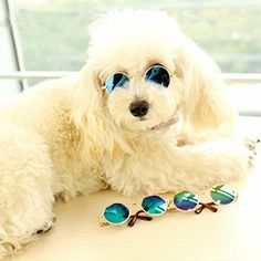 Small Pet Dogs Cat Glasses Sunglasses Dog Cat Eye-wear Accessories Pet Supplies For Pet Products Cat Cool Photos Props Protective Dogs, Stylish Sunglasses, Cat Accessories, Dog Wear, Look At You, Little Dogs, Dog Supplies, Small Dogs, Best Dogs