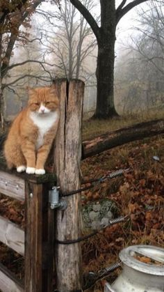 I would love to be like this kitty,enjoying an autumn day with no worries I Love Cats, Crazy Cats, Cute Cats, Animals And Pets, Cute Animals, Amor Animal, Orange Cats, Ginger Cats, Here Kitty Kitty