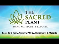 The Sacred Plant: Healing Secrets Exposed - Episode 2 - YouTube