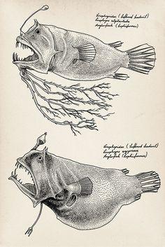 The angler fish. Sea Creatures Drawing, Deep Sea Creatures, Creature Drawings, Weird Creatures, Nemo, Underwater Creatures, Bizarre, Deep Sea Fishing, Sea Art