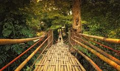 Just one of the hanging walkways you can find in Loboc, Bohol, Philippines.